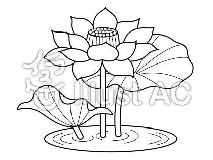 蓮の無料フリーイラスト素材白黒モノクロ