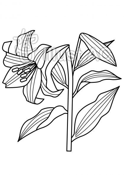 百合の無料フリーイラスト素材白黒モノクロ