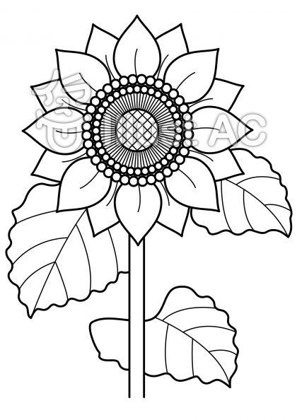 ひまわり2の無料フリーイラスト素材白黒モノクロ